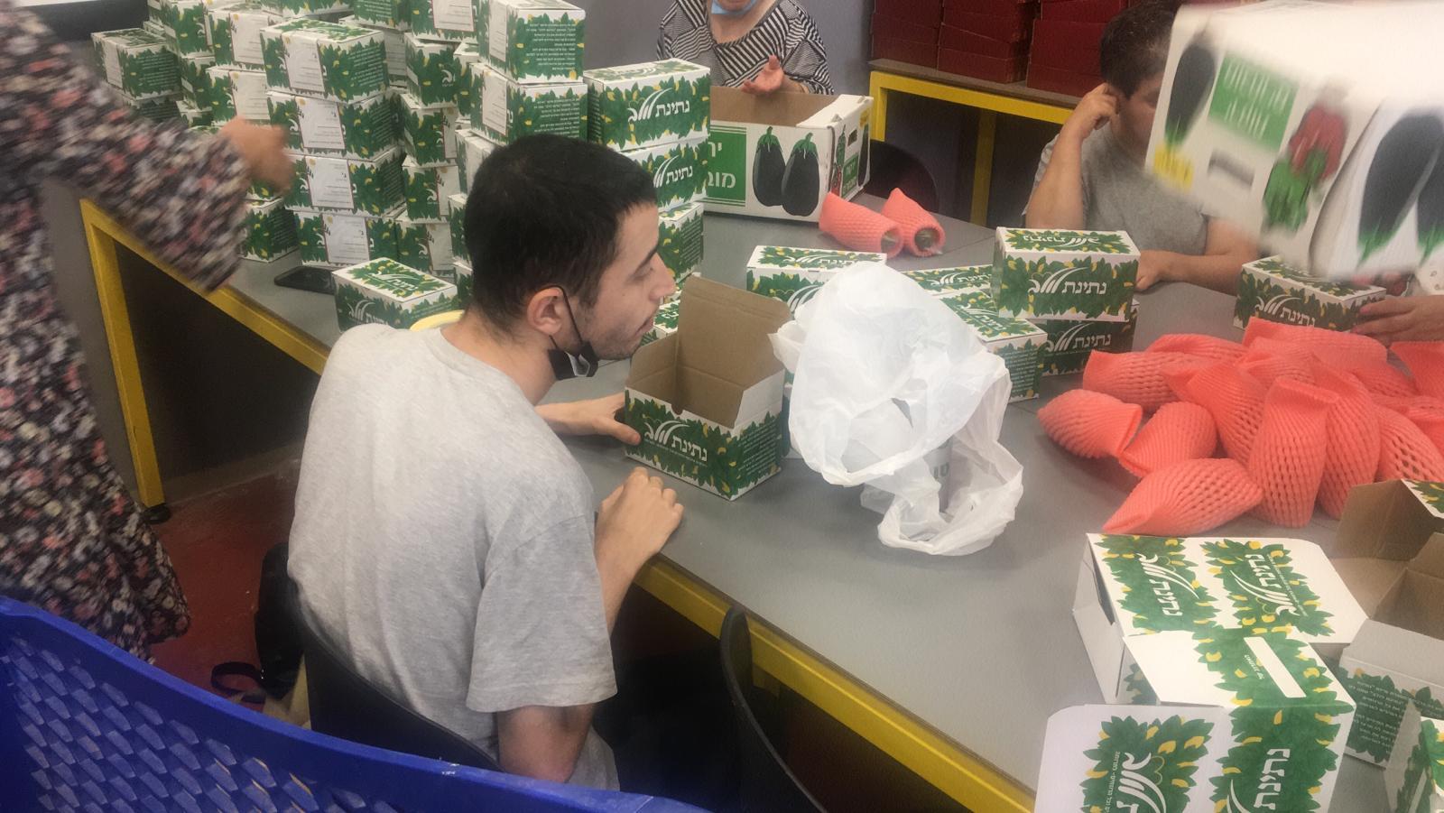 Packaging etrogim at ADI Ofakim אורזים אתרוגים בעדי אופקים